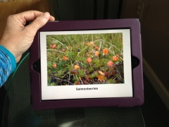Salmonberries on iPad